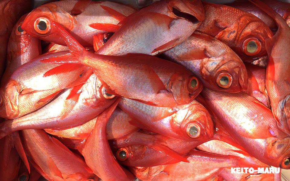 究極の釣り「深海釣り」の5つの魅力